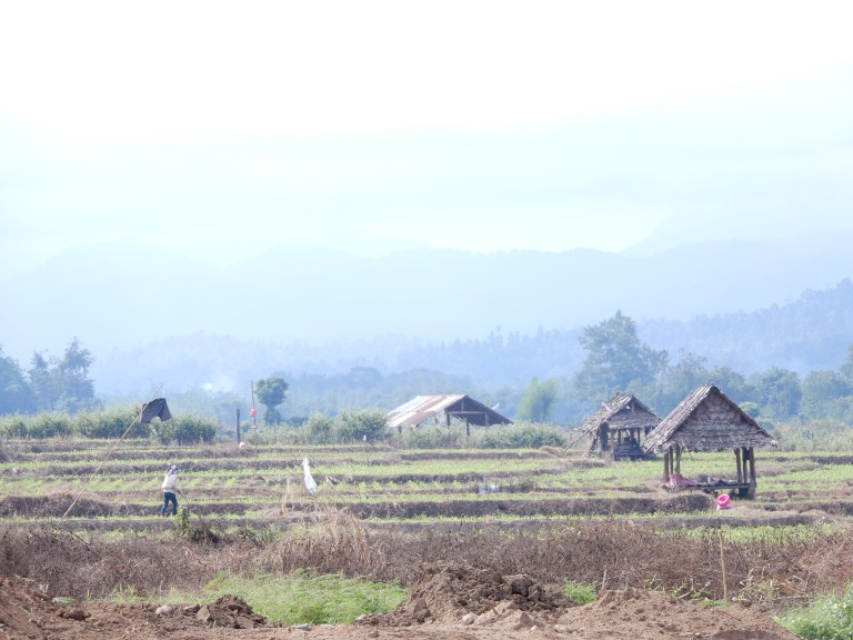 Ma Sariang - rice paddies and houses after harvesting