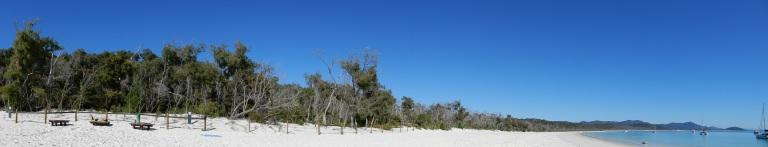 Het Woud op de frontlinie van de kust op Whiteheaven Beach in Whitsundays