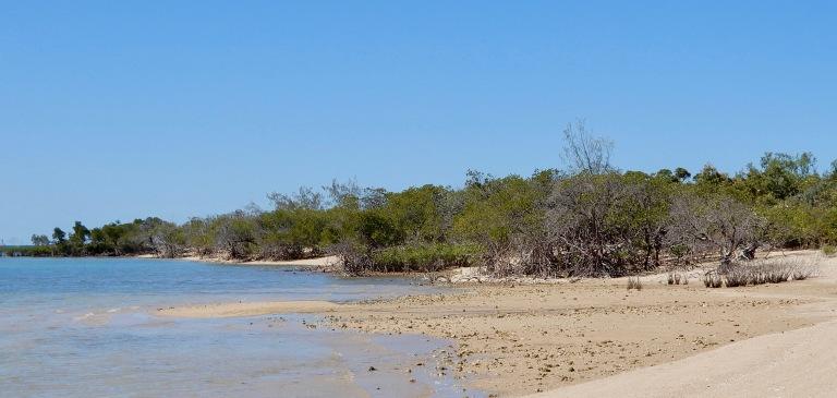 Mangroves vangen en binden de bodem met hun zwevende wortels en takken