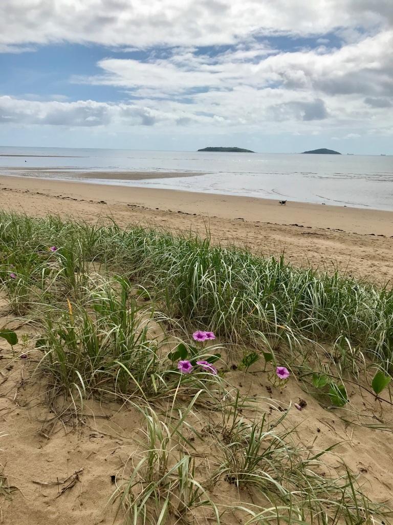 Purple flowers in the dunes of Mackay.